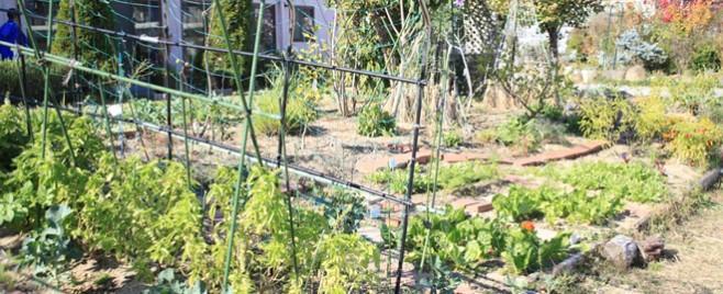 野菜が育っています。