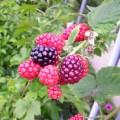 ガーデンに自然の恵みが!